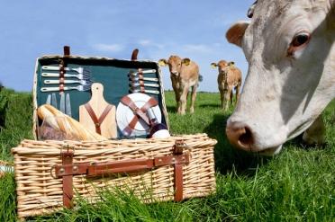 71242-picknick-mand-met-koeien-op-de-achtergrond